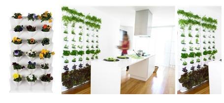 Mini Garden jardin huerta en tu casa